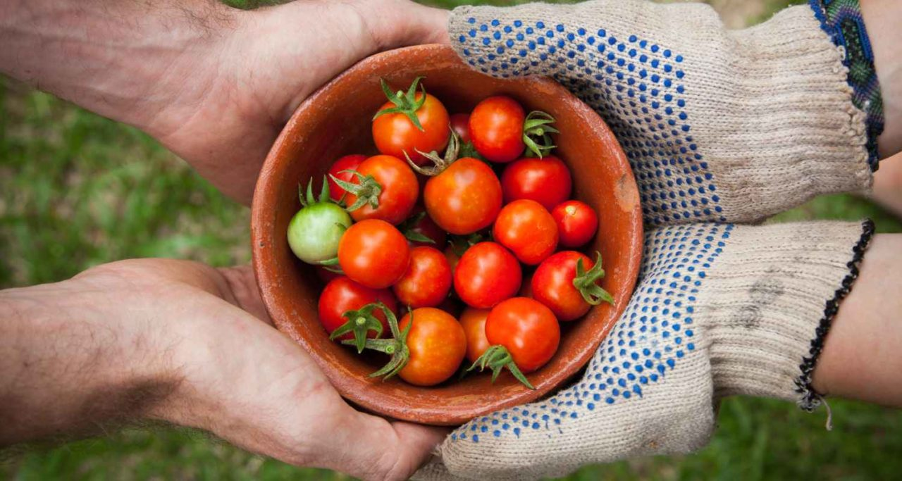 pomidory-1-1280x683.jpg